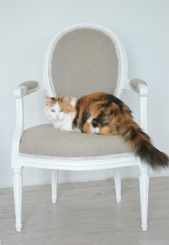 chair-restoration-cat-2doigtsdidee